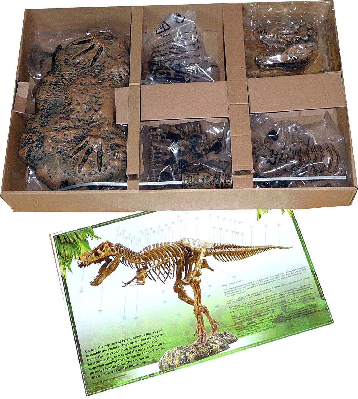 giochi-di-dinosauri-per-bambini-scheletro